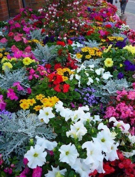 FlowersMich.jpg